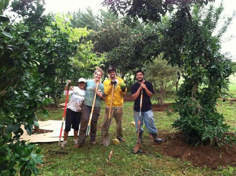 rainy day mulching