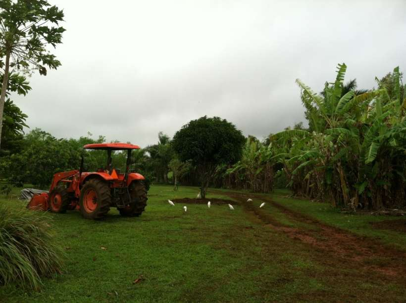 tractor mulching trees