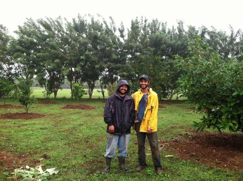 farmers mulching trees