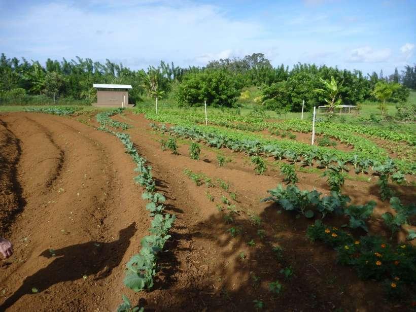 garden beds farming