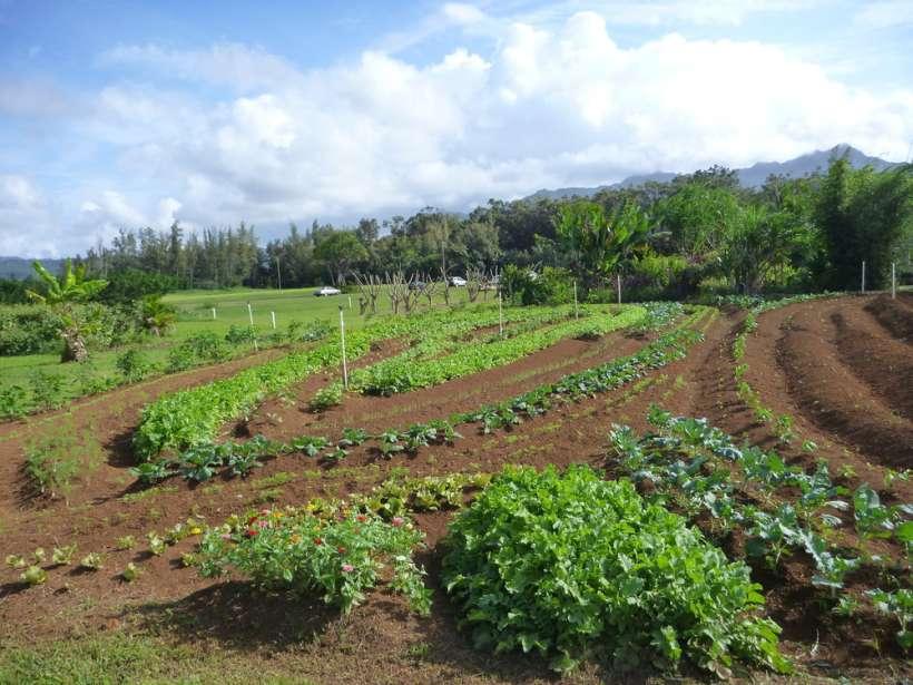 biodynamic garden farm
