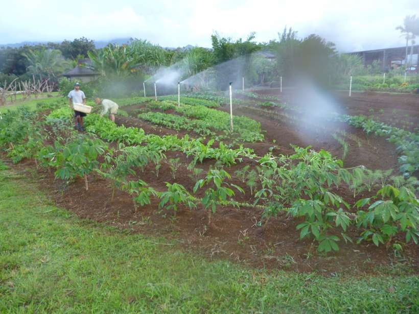 farm overhead irrigation garden