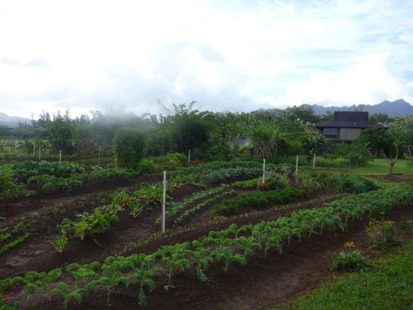 kauai kilauea garden farm