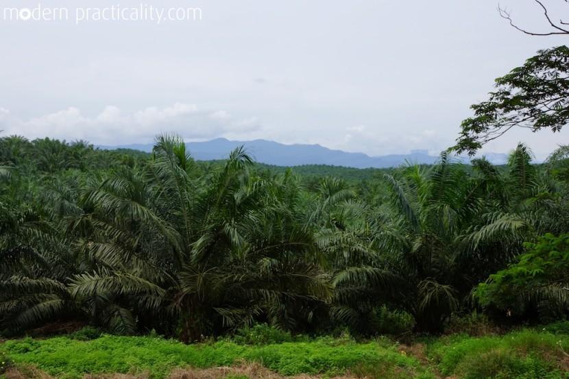 Tawau-Borneo-Malaysia-414-imp