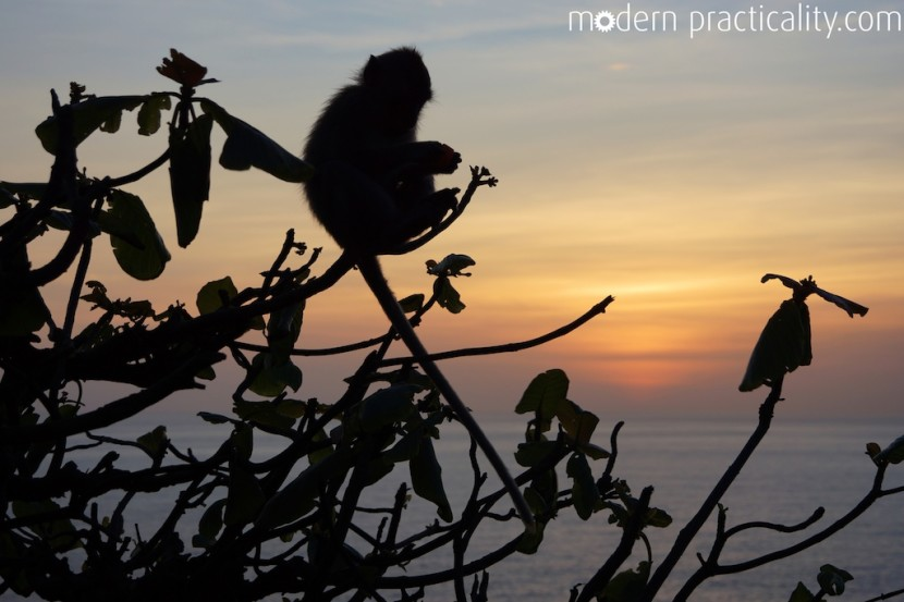 Monkeys in the sunset at the Uluwatu Temple, Bali