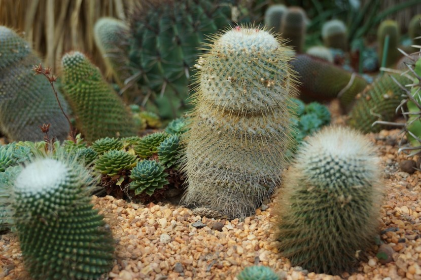 Cacti, Gardens by the Bay