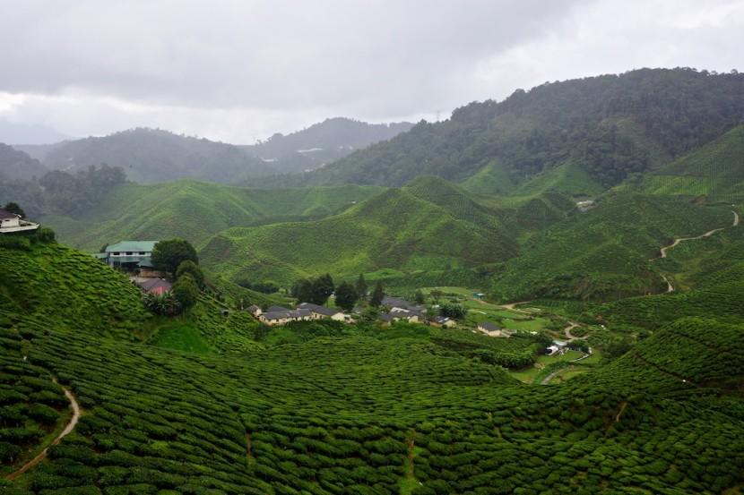Cameron-Highlands-Tanah-Rata-Malaysia-023