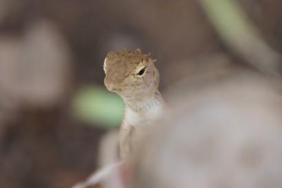 A beautiful lizard.