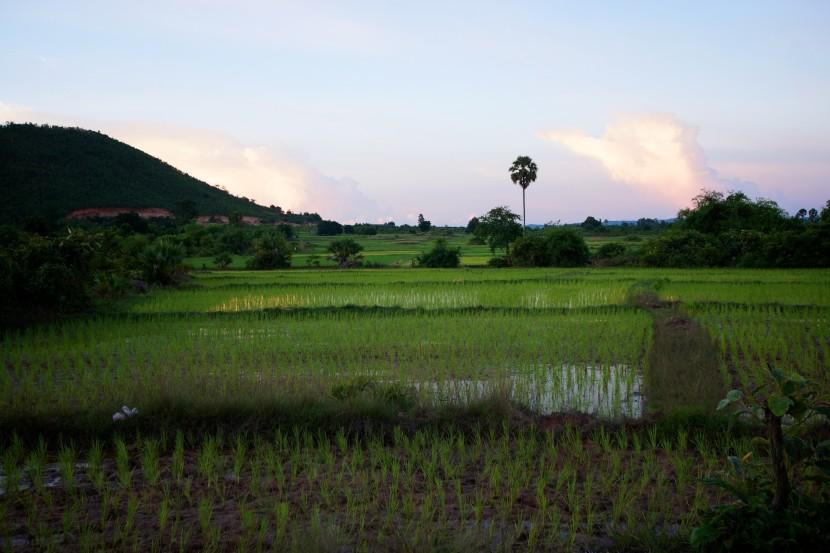 Ashoka-Farms-Cambodia-04