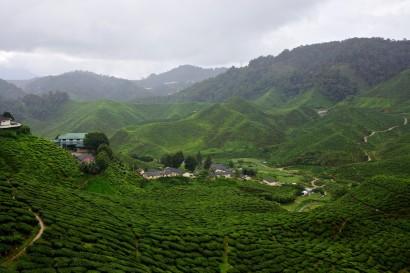 Cameron Highlands,Malaysia,Tanah Rata