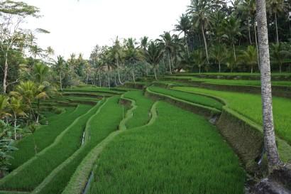 Bali,Gunung Kawi,Indonesia,Tampaksiring,temple
