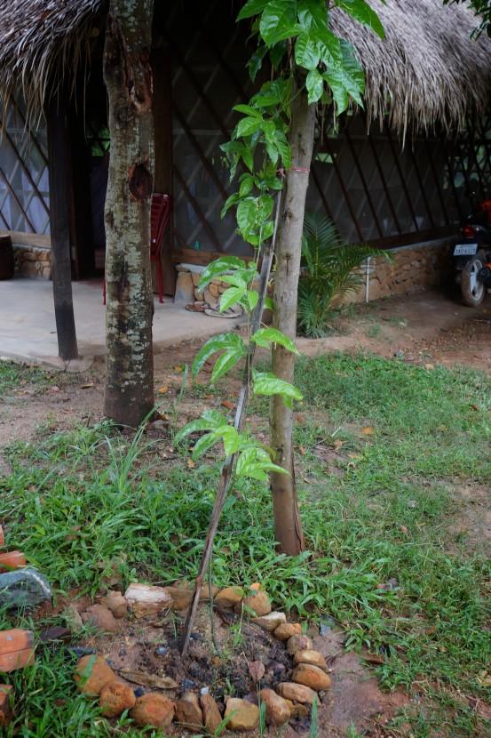 Kep-Cambodia-091