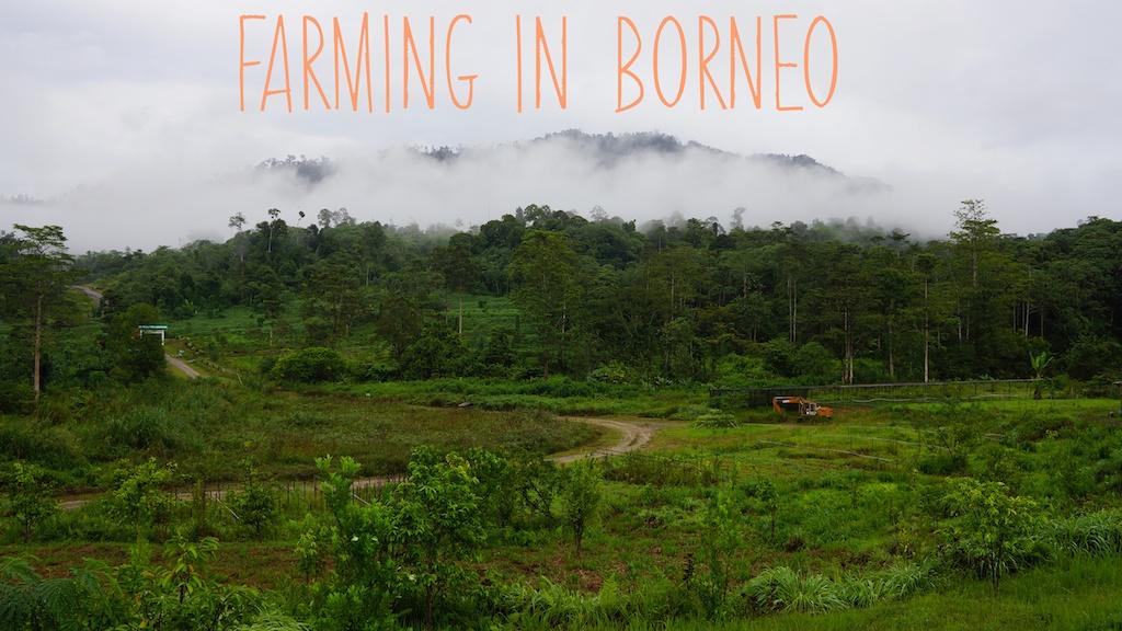 Farm,Malaysia,Tawau