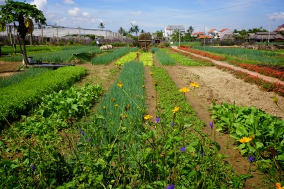 Hoi An, Vietnam, farming, cooking, class